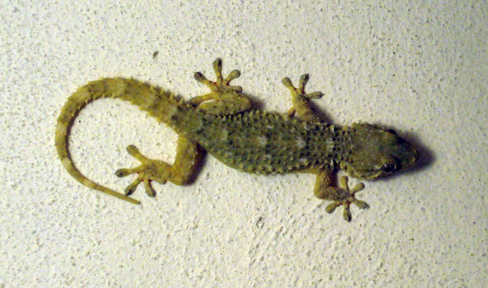 Gecko adhesion and Nanotechnology | ouchmath